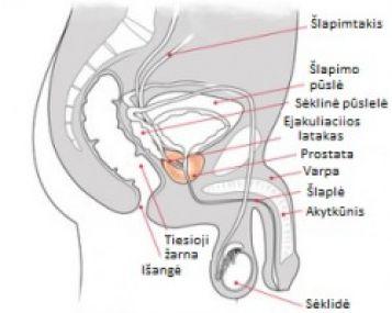 kodėl yra erekcija bet nėra ejakuliacijos