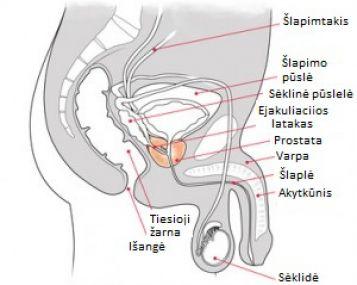 erekcijos disfunkcijos vaistai ko reikia erekcijai prieš lytinį aktą